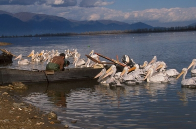 Kerkini Lake_10
